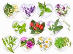 Kräuter, Früchte u. Heilpflanzentee