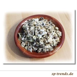 Moringa Oleifera Samen / 10 St / in Tüte od. Dose verpackt
